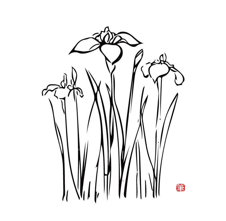 花菖蒲イラスト