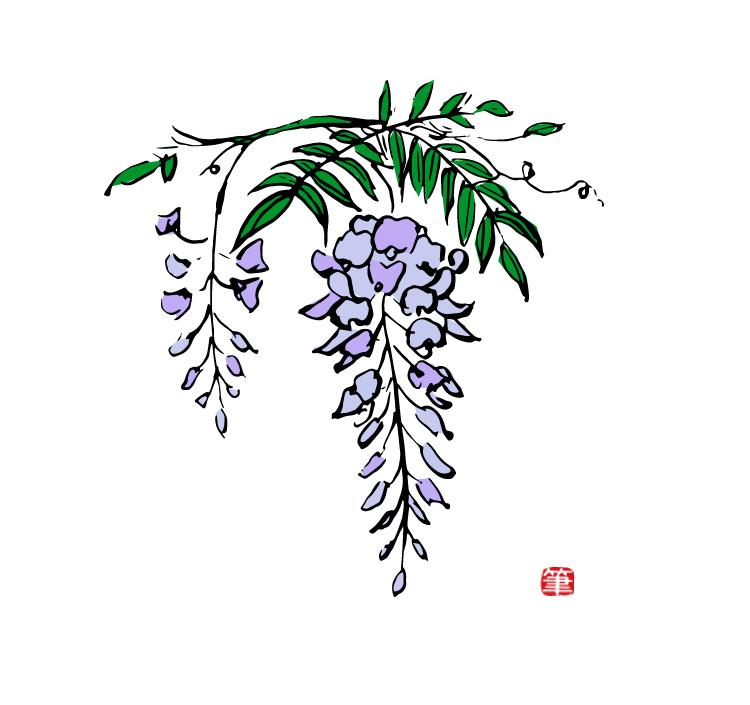 和風季節の花イラスト・藤